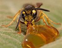 Eşek Arıları İle Benzer Yönleriniz :)