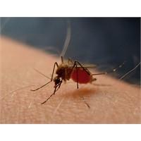 Sivrisinek Isırıklarının Tedavisi
