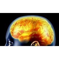 Epilepsi Hastalığı Ve Bitkisel Tedavisi