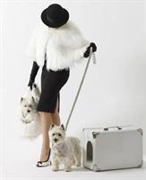Köpek Taşıma Bavulunu Gördünüz Mü?
