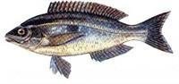 Bütün Balık Türleri