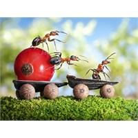 Günah Var Mı Karıncayı Kırınca?