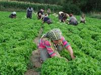 İşsiz Kalan Çiftçi Oluyor