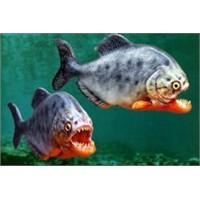 Meğer Piranhalar Konuşa Konuşa