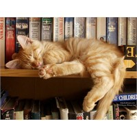 Kitaplık Kedileri!  Bayılacaksınız!