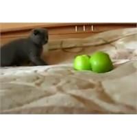 Yeşil Elmalı Gerilim Filmi