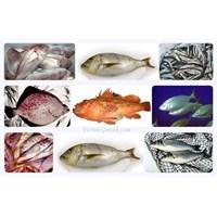 Denizlerimizdeki En Lezzetli 10 Balık Türü