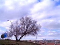 Ağaçlara Anlattım