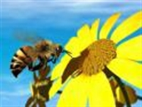 Arı Sütü İle Güzellik