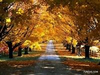 Müthiş Manzaralı İki Tarafı Ağaçla Kaplı Yollar
