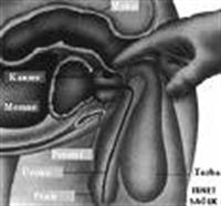 Prostat Kanseri Ve Nedenleri Nedir?