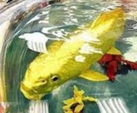 Balık Değil Sanki Mücevher
