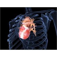 İnsan Hücrelerinden Yapılan Farenin Kalbi Atıyor