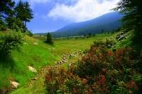 Temiz Hava, Sağlıklı Günler (yavşan Yaylası, Başko