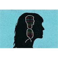 Kadın Beyninde Erkek Genleri Bulundu