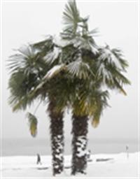 Kuzey Kutbu nda 53 Milyon Yıl Önce Palmiyeler Varm