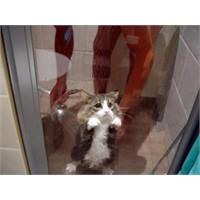 Kedinin 3 Numaralı Bakışı
