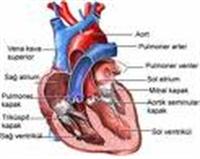 Kalp Sağlığımızı Korumak İçin Ne Yapmak Gerekir ?