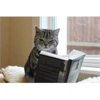 Kitap Okuyan Kediler Şaşırtıyor!