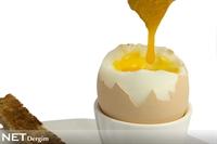 Yumurta İktidarsızlığa İyi Geliyor