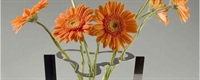 Dekoratif Vazo Modeller