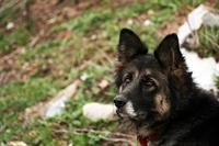 Köpeklerde Yalnızlık Endişesi