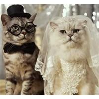 Kuzum Evleniyor