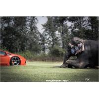 Adv1 Lamborghini Aventador Fil İle Poz Verdi