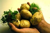 Patates Diyeti Nasil Yapilir?