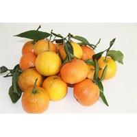 Hastalıktan Koruyan Kış Meyve Sebzeleri