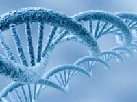 Telomer Ölümün Şifresi