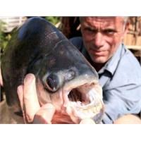 Fransa'da Cinsel Organ Yiyen Balık Bulunmuş