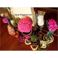 Çiçekleriniz Hiç Solmasın