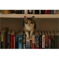 Kitaplar Ve Kediler! Çok Sevimliler!