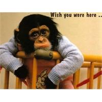 Ben Maymun Muyum?