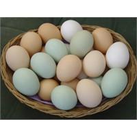 Teb Kobi İle 2 Milyon Liralık Yumurta İhraç Ediyor
