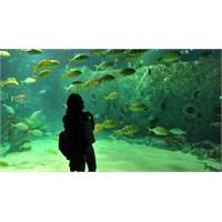 İstanbul Akvaryum'da İlk Balık Doğumu Gerçekleşti