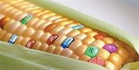 İşlenmiş Gıdalarla Beslenenlerin Depresyon Riski D