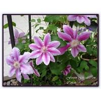Canan'ın Bahçesinde Dört Mevsim