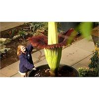Dünyanın En Garip Ve Ürkütücü 6 Çiçeği