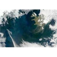 Plankton Patlamasının Sebebi Ortaya Çıkarıldı