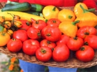 Bir Metrekarede Organik Tarım