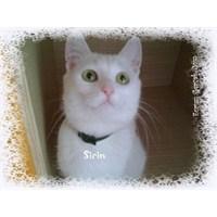 Kedilerin Gelişimi, Bakımı Ve Eğitimi