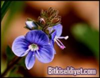 Şifalı Bitkiler - Mine Çiçeği Ve Faydaları