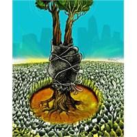 Tek Ağacın Gölgesindeki Milyonlar Ve Gelecek Umudu