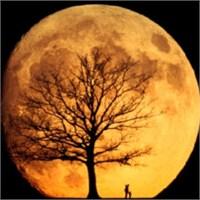 Bir Parça Ay'ınız Olsun İster Miydiniz?