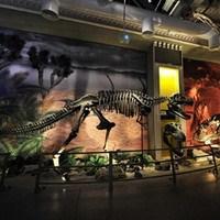 Öğrenciler İçin Ücretsiz Dinozor Gezisi