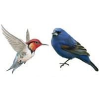 Kuşlar da İletişim Kurar