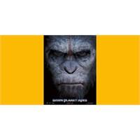 Maymunların İlk Tanıtım Filmi