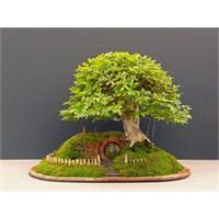 Bonsai Ağacından Hobbit Evi